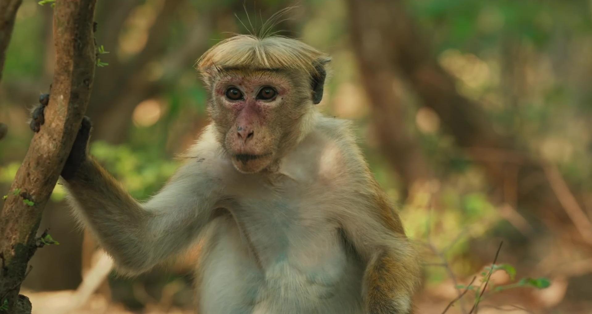 Au-royaume-des-singes-02